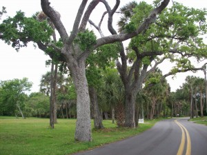 trees on Rockledge Drive